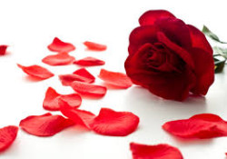 Drop The Rose Petals – Party Game